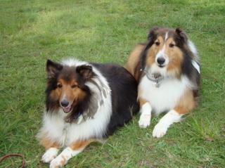 pbclswiki / Favorite Animals